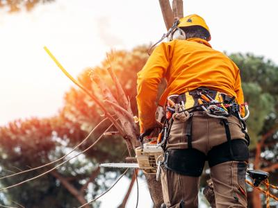Report: Arborists are Now Busy Year-Round