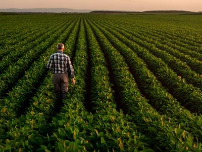 Supporting Your Agriculture Clients During Change